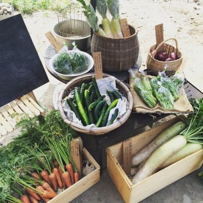 6.2 朝採れ野菜