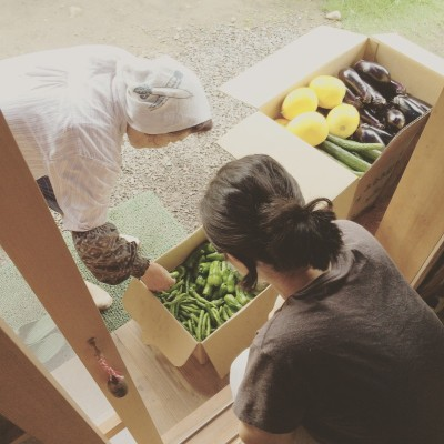 採れたて野菜