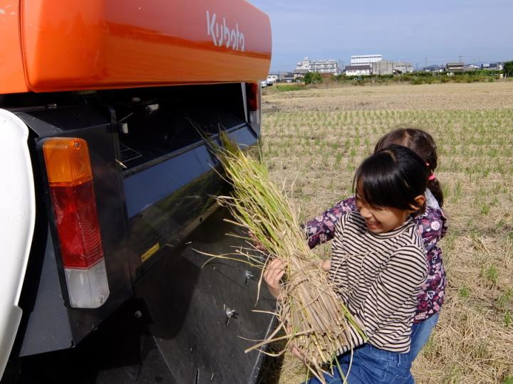 稲刈り脱穀2