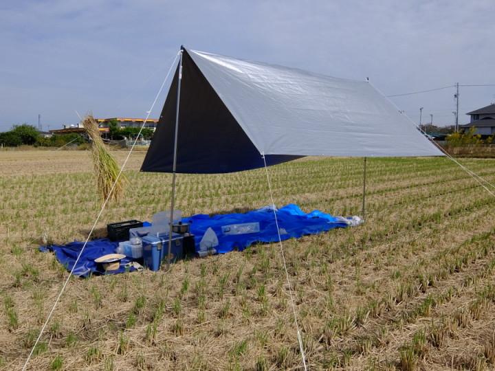 稲刈りテント