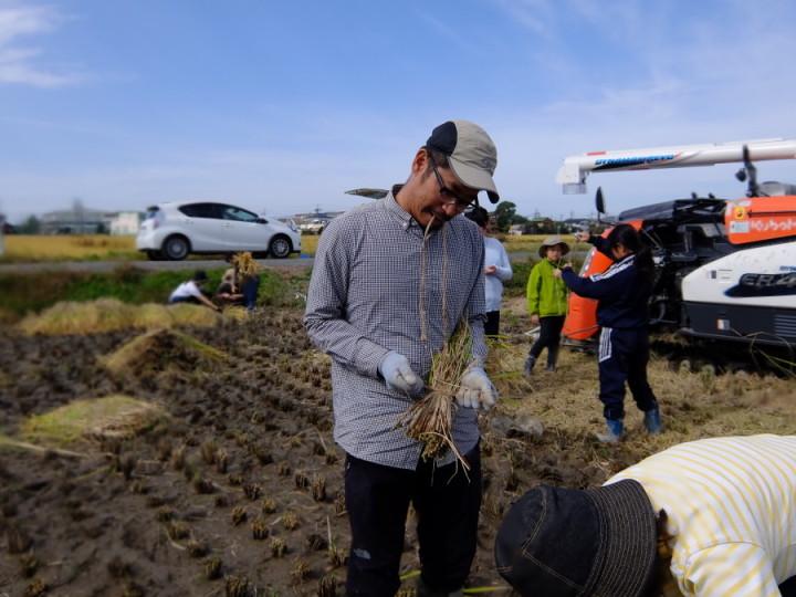 稲刈り束2