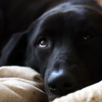 愛犬 稲 いね