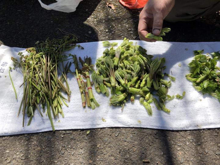 山菜採りに行きました